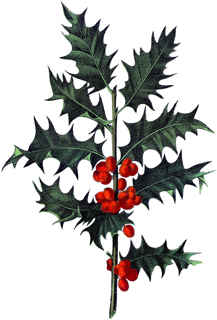 Antique Botanical Holly Image