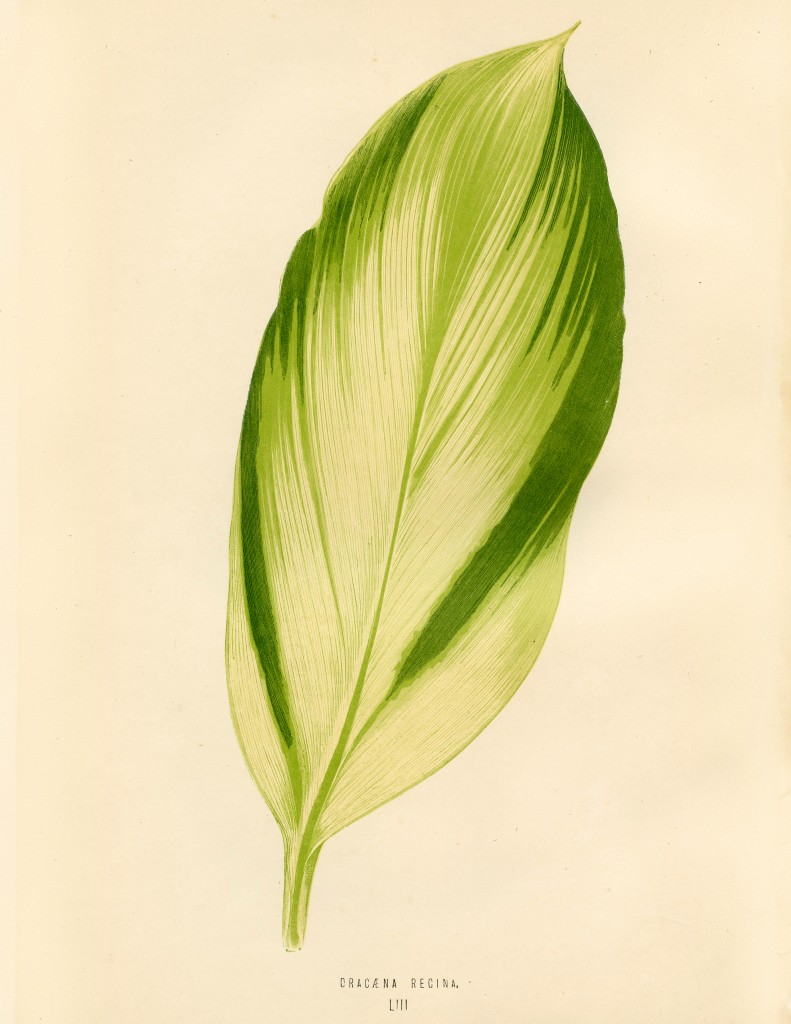 Green Tropical Leaf Download