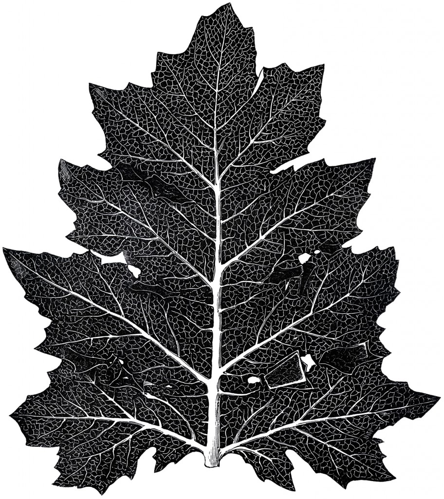 Vintage Leaf Design Download