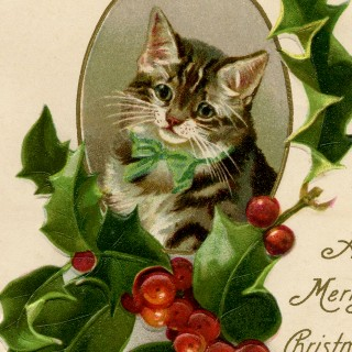 Christmas Holly Cat Image!