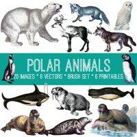Polar Animals Image Kit