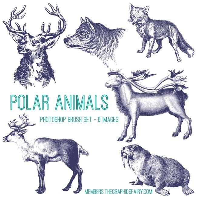 polar_animals_brushes_graphicsfairy
