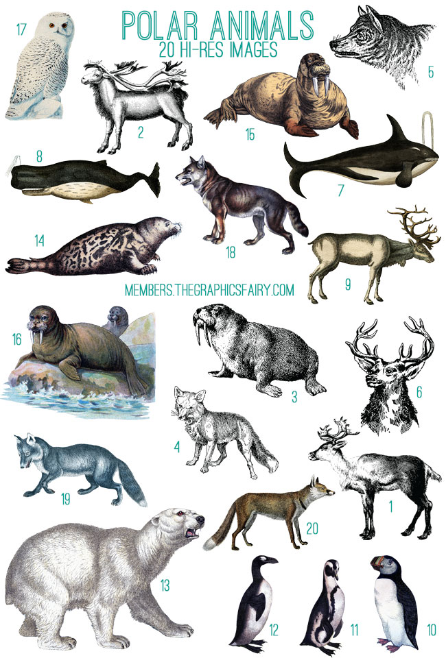 polar_animals_image_list_graphicsfairy