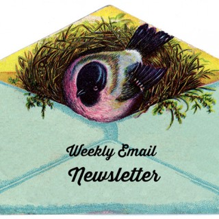 Friday Freebie Weekly Newsletter