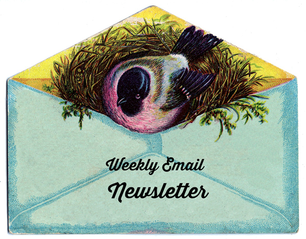 Friday Freebie Weekly Newsletter