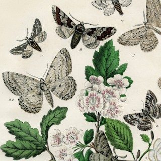 Bohemian Moths Printable – Marvelous!