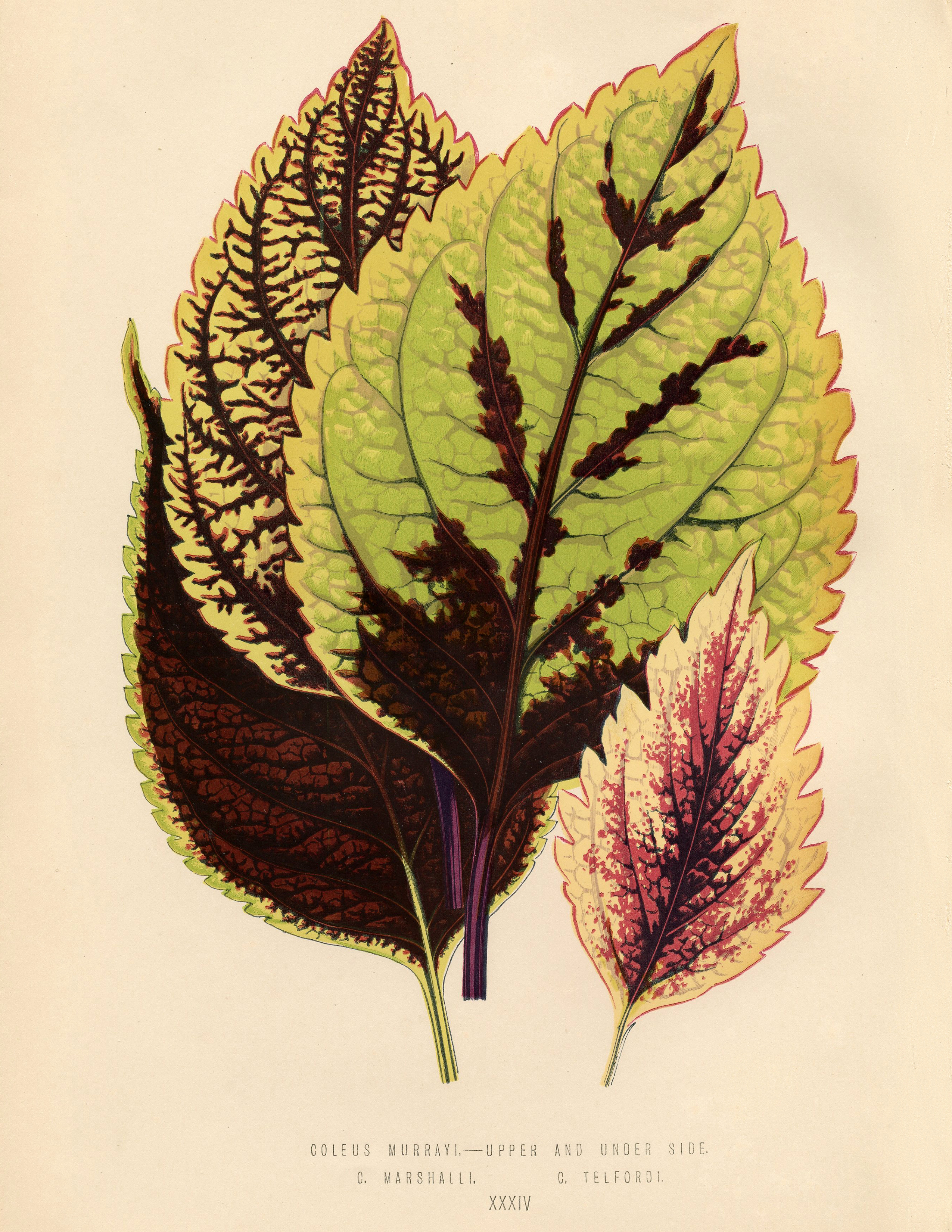Public Domain Tropical Leaves