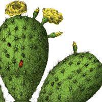 Vintage-Cactus-Botanical-Image-thm-GraphicsFairy