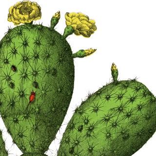 Vintage Cactus Botanical Image!