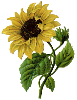 Sunflower Vintage Image