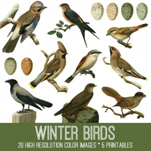 Winter Birds Image Kit