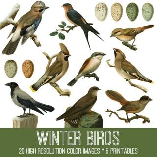 Winter Birds Image Kit! TGF Premium
