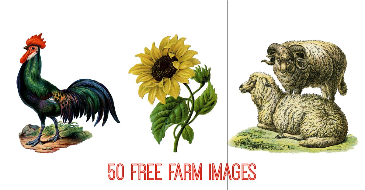 Gnome Garden: 50 Free Farm Images For Farmhouse Style DIY Projects