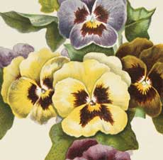 Easter Pansy Cross Image – Beautiful!