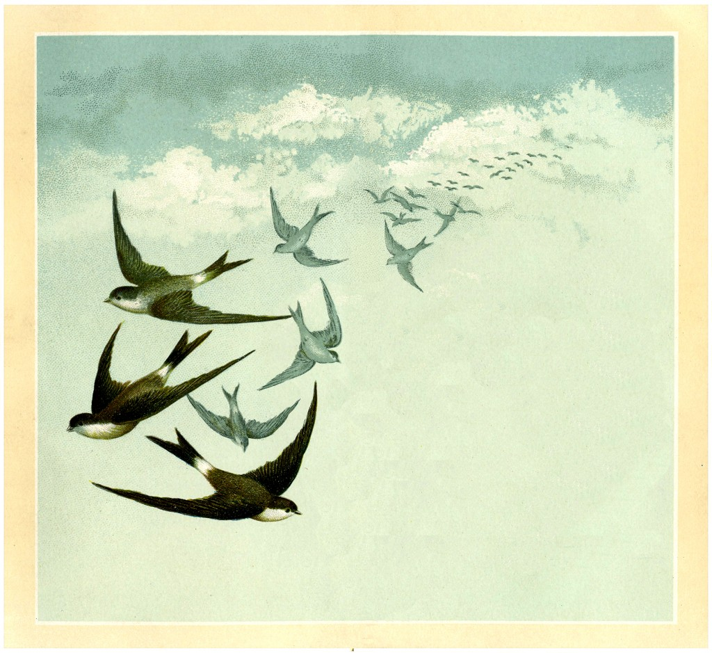Vintage Swallows Image
