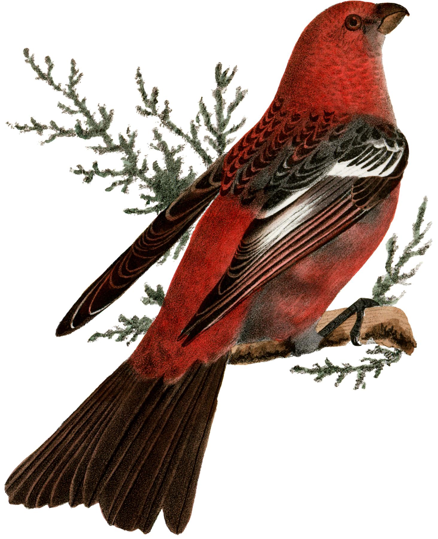 Free Pink Bird Clip Art Image