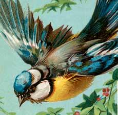 Gorgeous Vintage Bluebird Image!