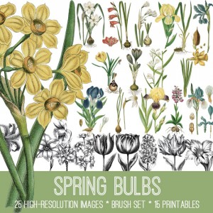 Spring Bulbs Image Kit