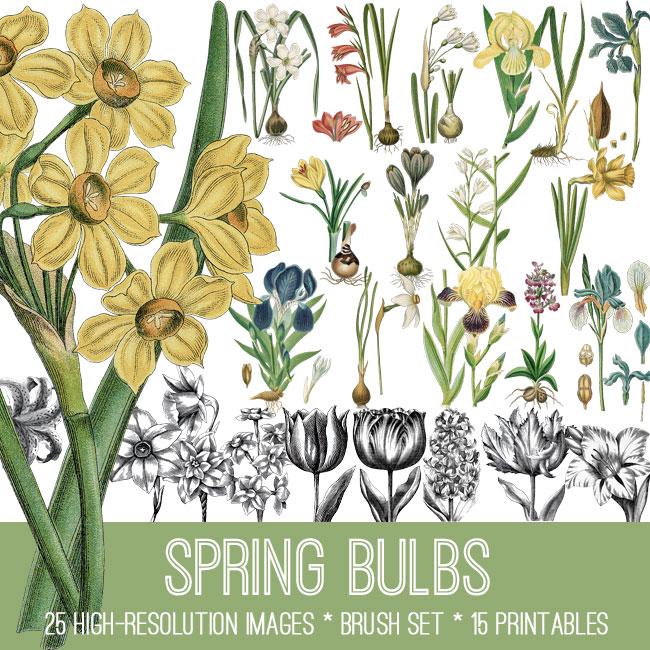 Spring Bulbs Image Kit