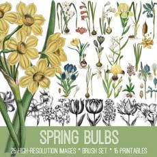 Beautiful Spring Bulbs Image Kit! TGF Premium