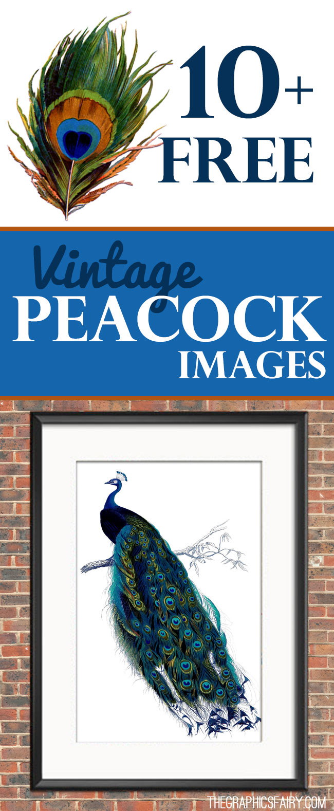 10 Free Vintage Peacock Images Fabulous The