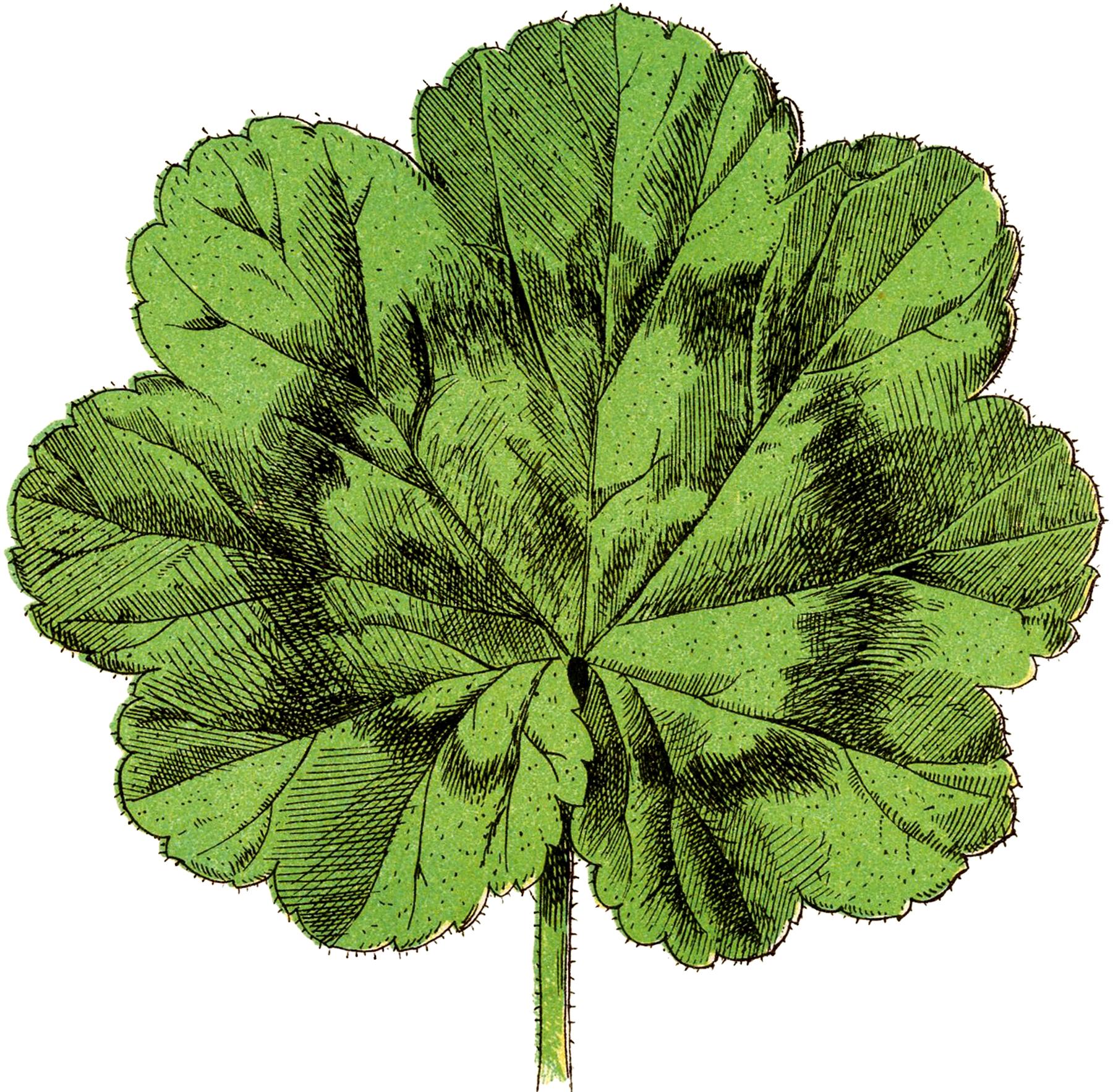 Vintage Geranium Leaf Image