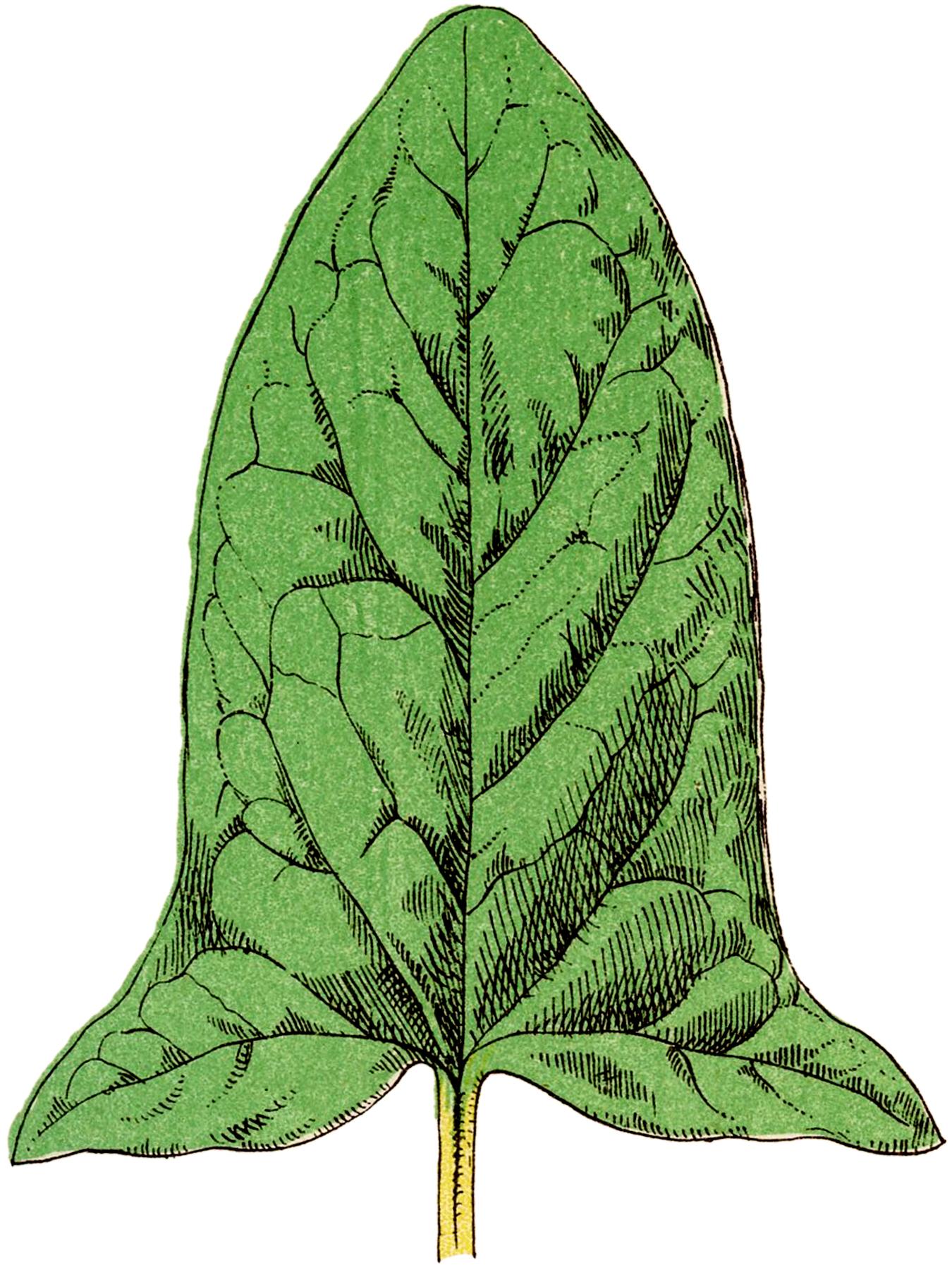 Vintage Green Leaf Image
