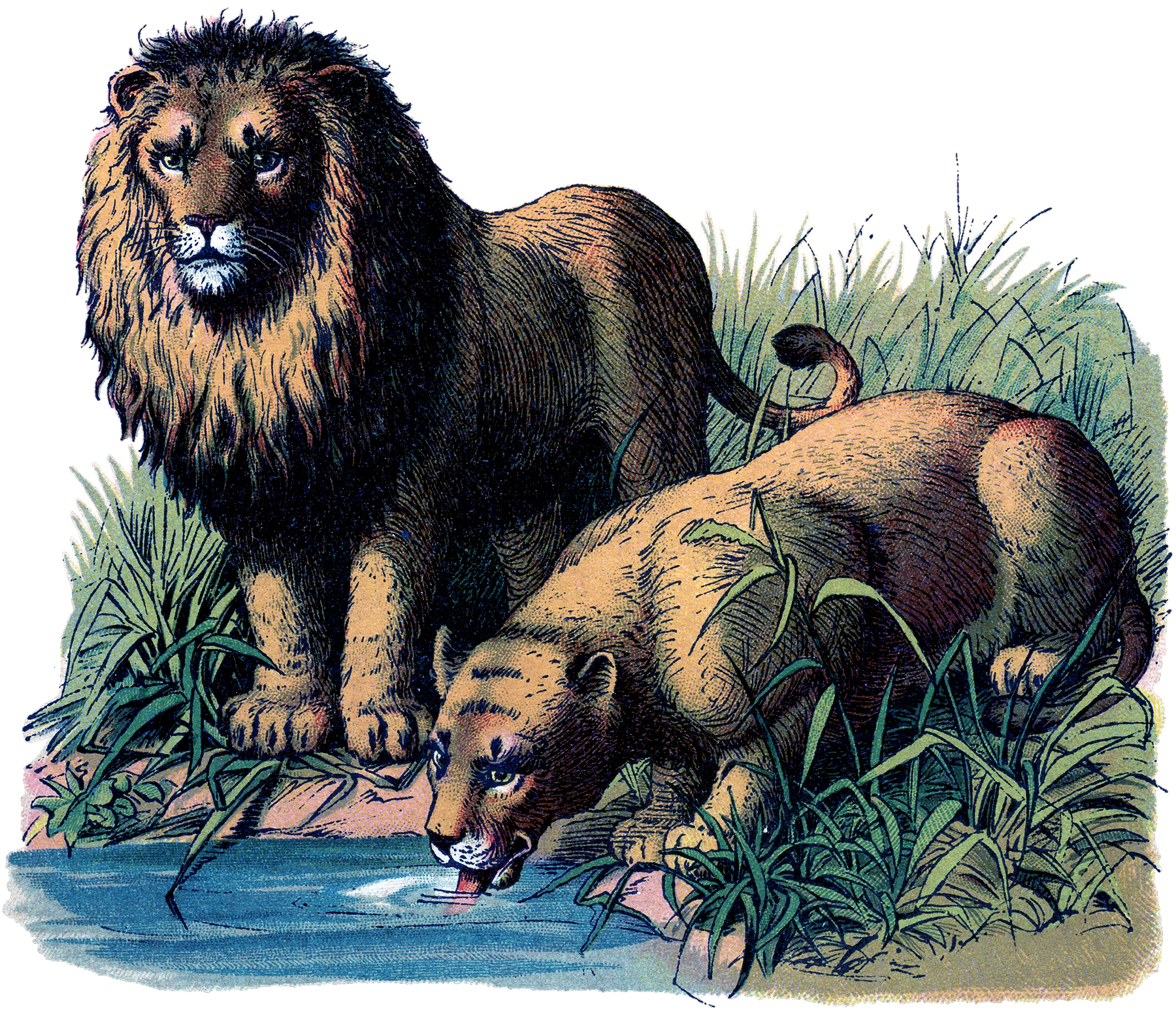 Vintage Lions Image