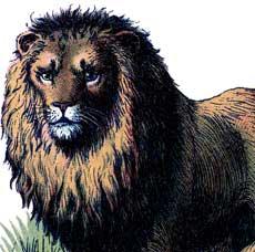 Marvelous Vintage Lions Image!