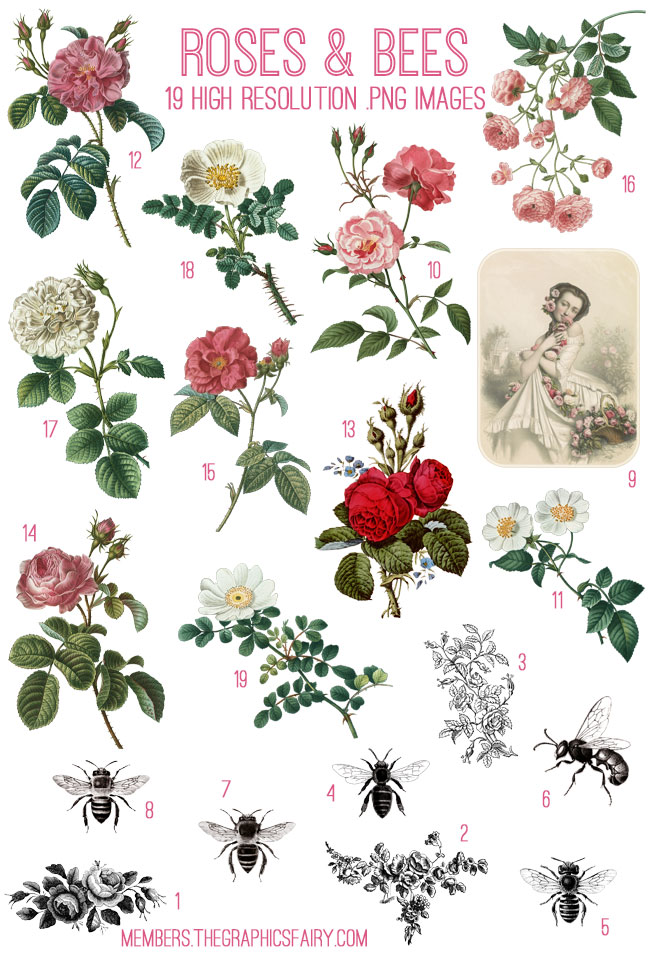 bee_rose_image_list_graphicsfairy