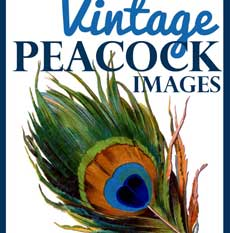 Vintage Peacock Images Thumbnail