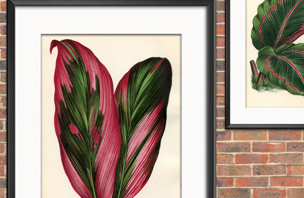 10 Free Tropical Leaves Printables Instant Art Botanicals The Graphics Fairy Free for commercial use no attribution required high quality images. 10 free tropical leaves printables