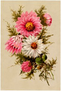 Free Vintage Asters Bouquet Image