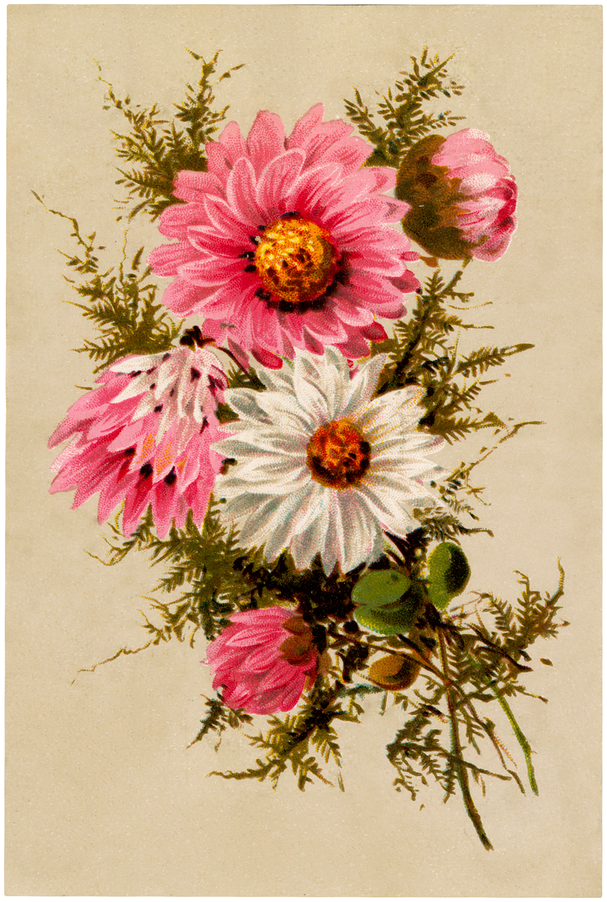 free vintage asters bouquet image   the graphics fairy