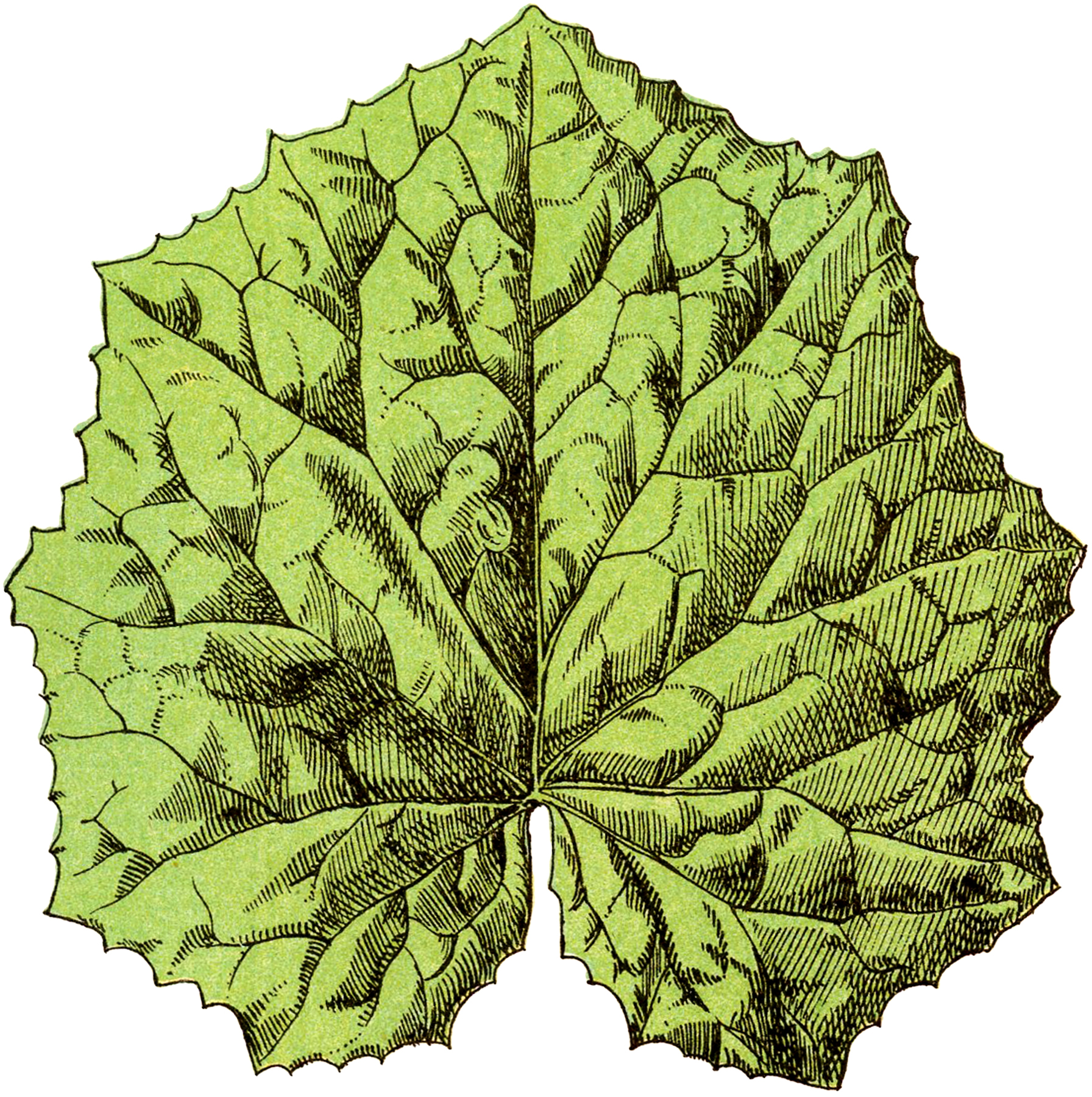 Old Coltswood Leaf Image