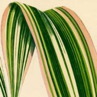 Striped-Tropical-Plant-Download-thm-GraphicsFairy