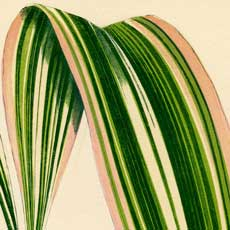 Striped Tropical Leaves Download!
