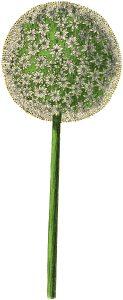 Vintage Allium Flower Image