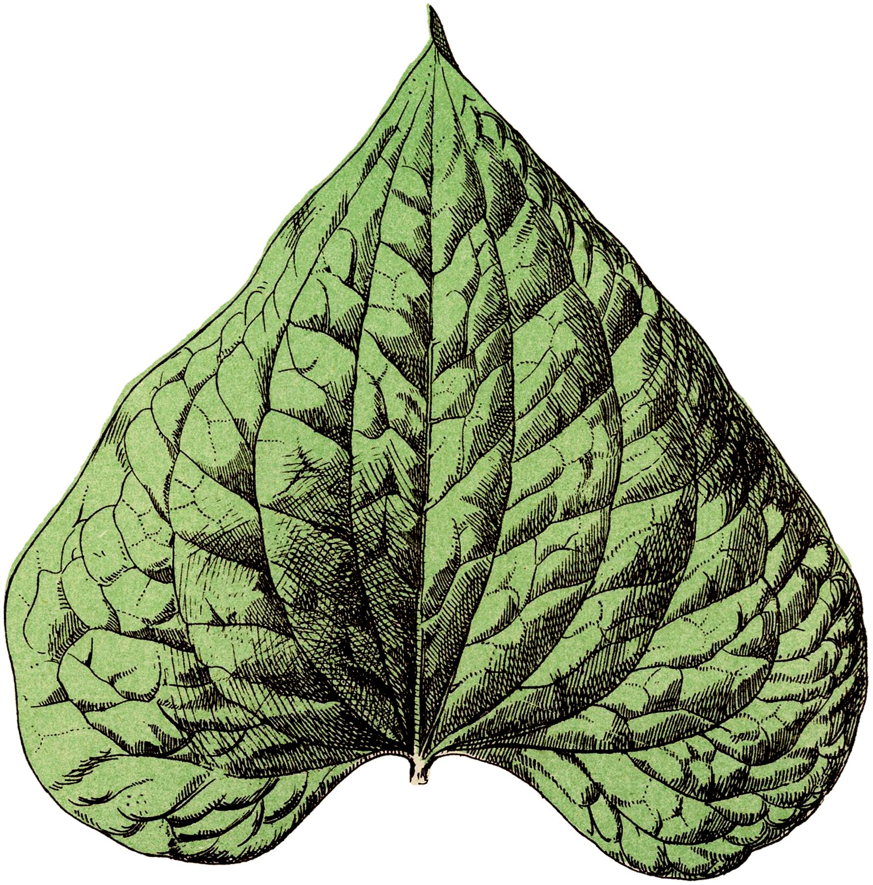 Vintage Botanical Leaf Image