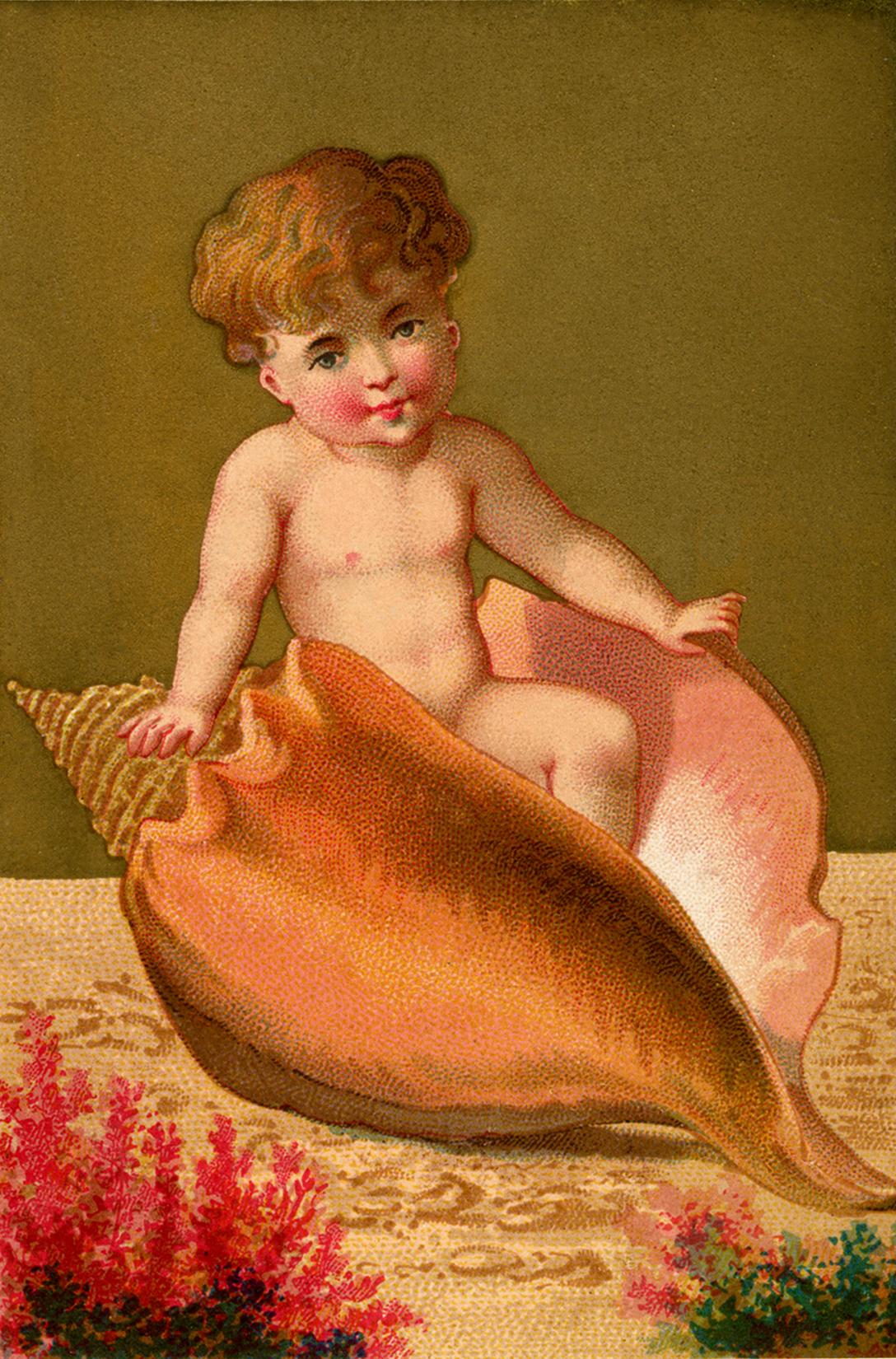 Vintage Seashell Baby Boy