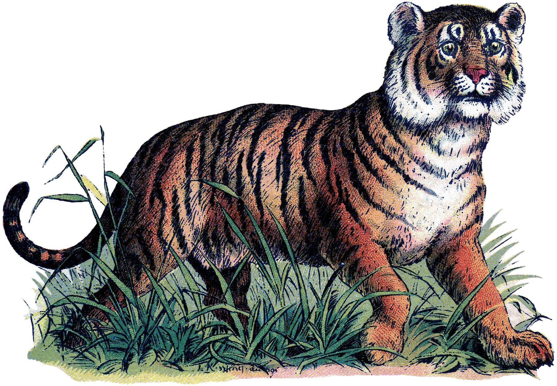 Vintage Tiger Freebie Image