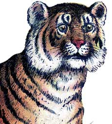 Vintage Tiger Freebie Image!