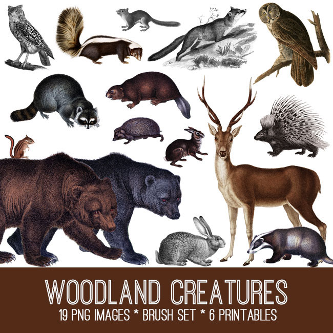 Woodland-Creatures-Image-Kit-GraphicsFairy
