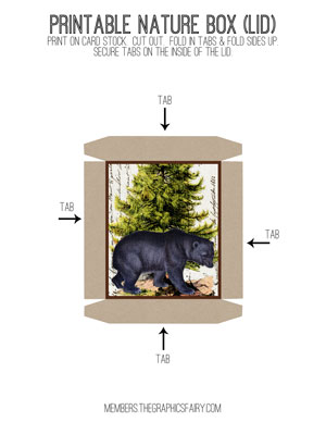 nature_box_lid_bear_graphicsfairy