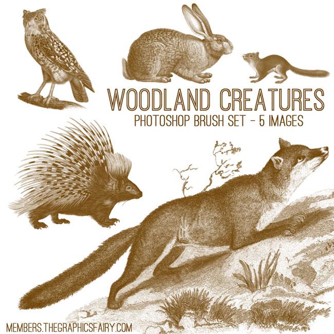 woodland_brushes_graphicsfairy