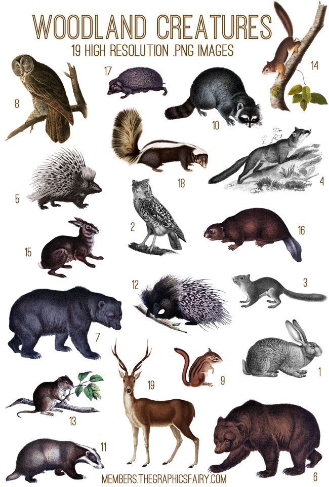 Woodland Creatures Image Kit Tgf Premium The Graphics Fairy