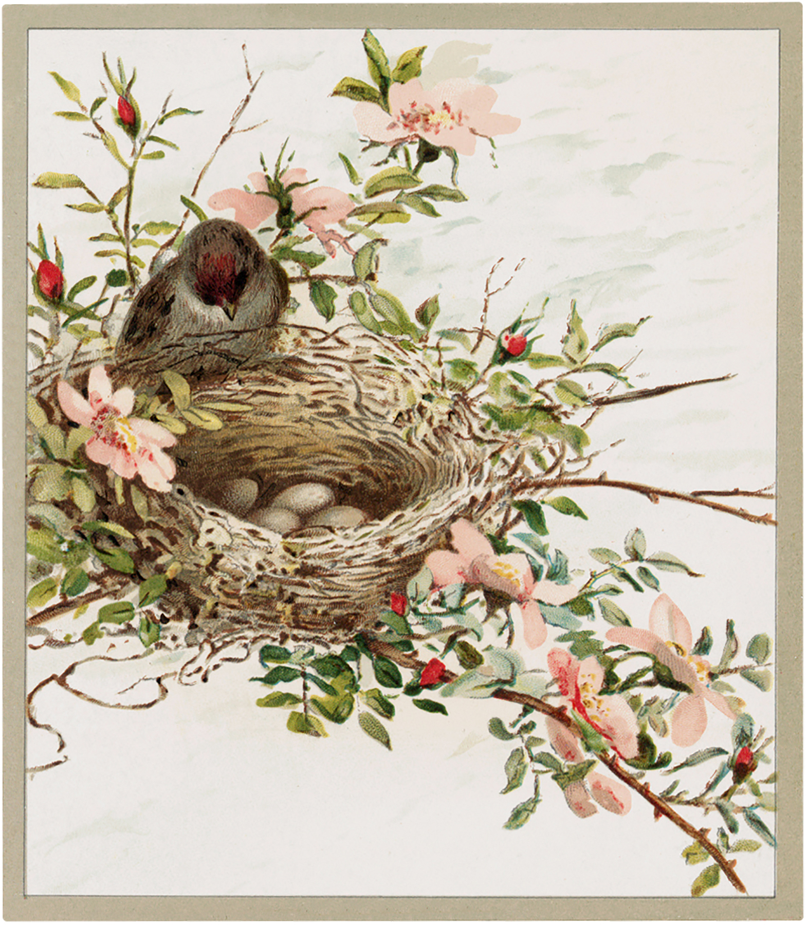 Pastel Bird Nest Picture