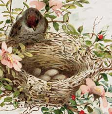 Lovely Lovely Pastel Bird Nest Picture!