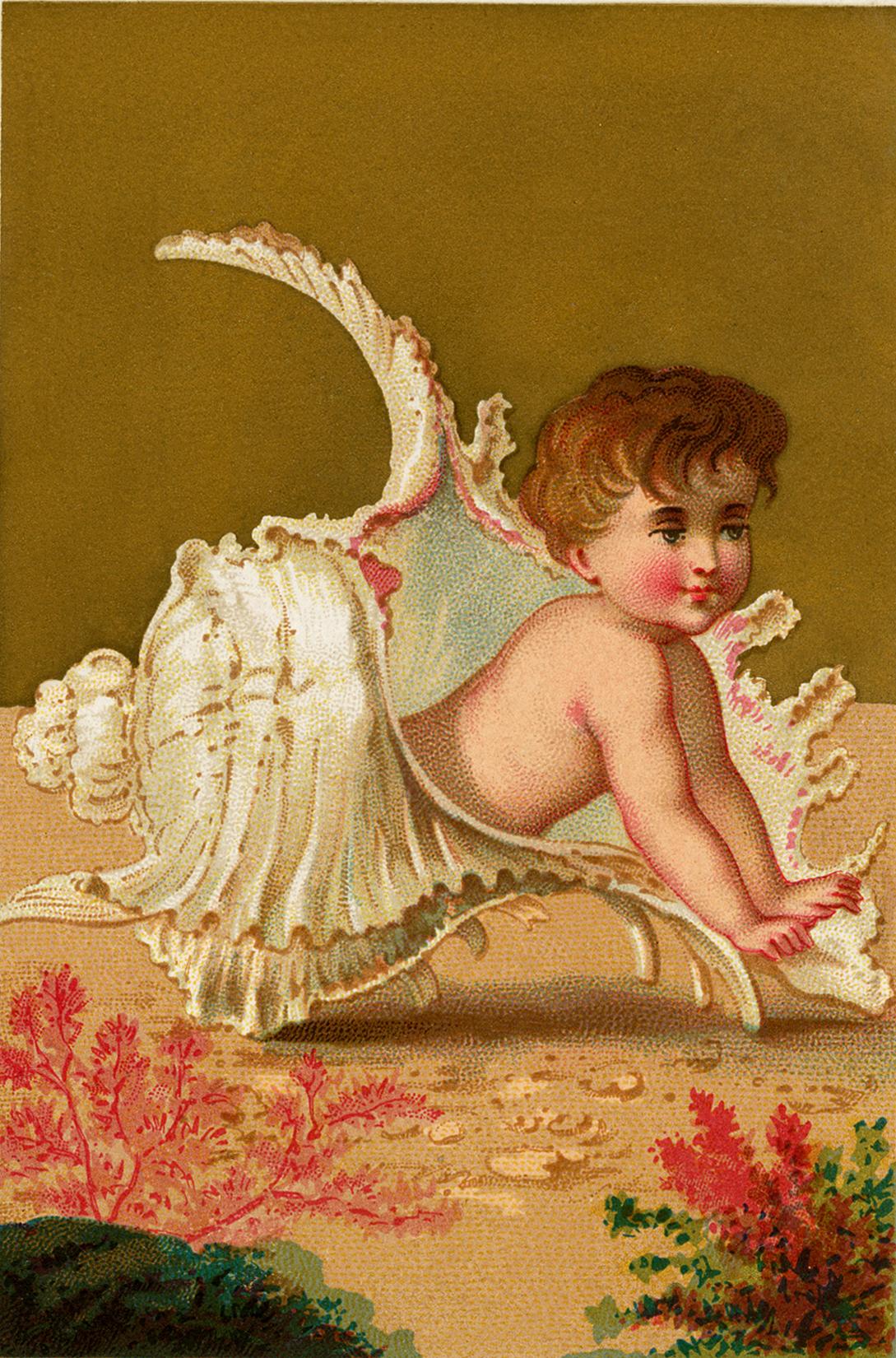 Public Domain Seashell Baby Image