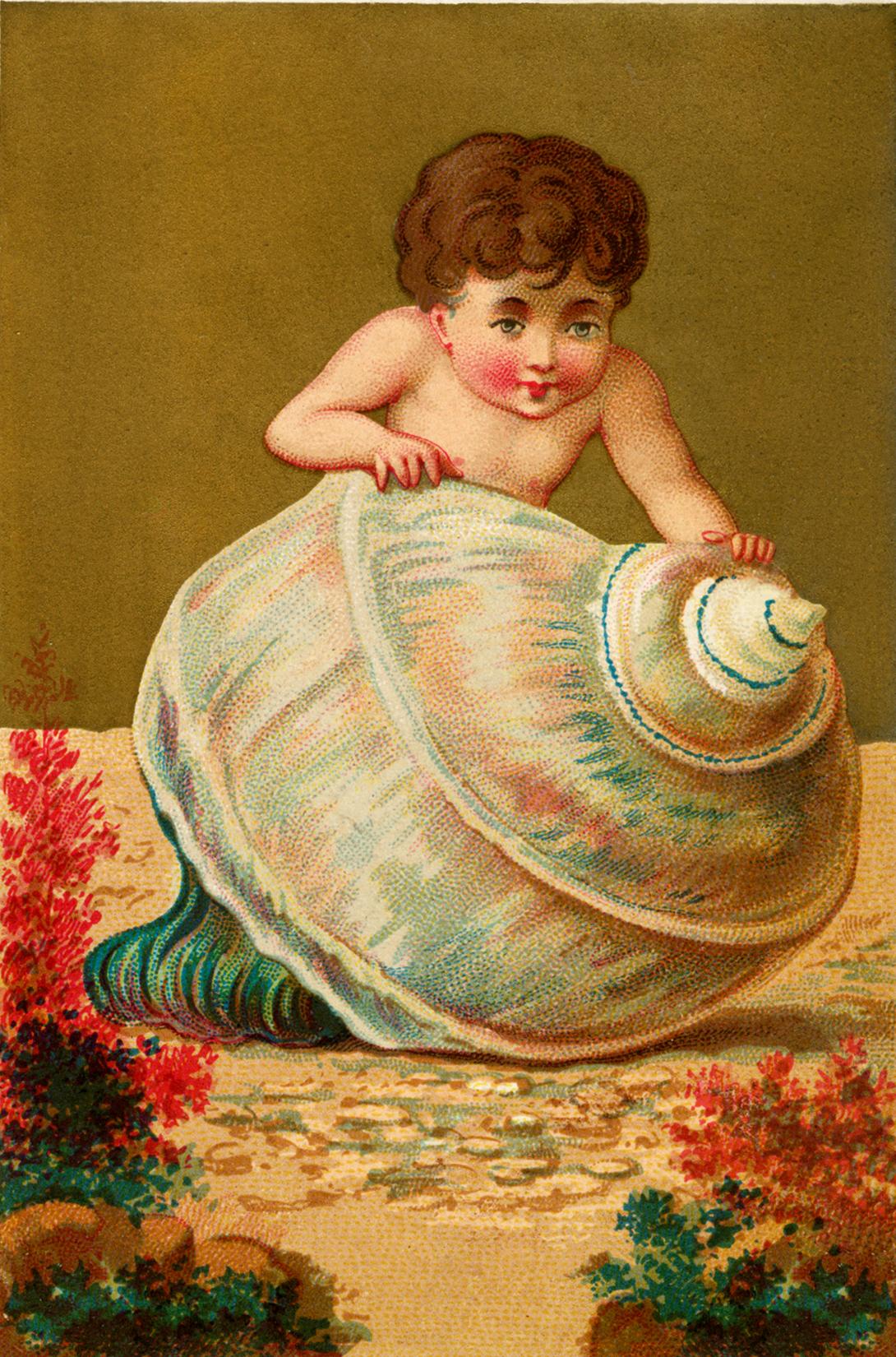 Seashell Child Image The Graphics Fairy